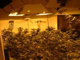 Lights To Grow Weed Indoors