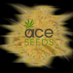 Ace Cannabis Seeds.Feminised and Regular Marijuana Seeds