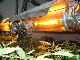 Expert Advice On Growing Weed Indoors