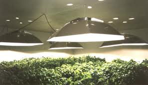 Metal Halide Grow Lights