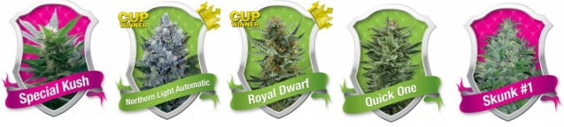 Buy Bulk Marijuana Seeds From Royal Queen Seeds