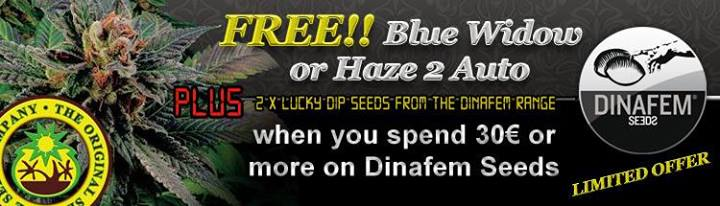 Free Cannabis Seeds From Dinafem Seeds