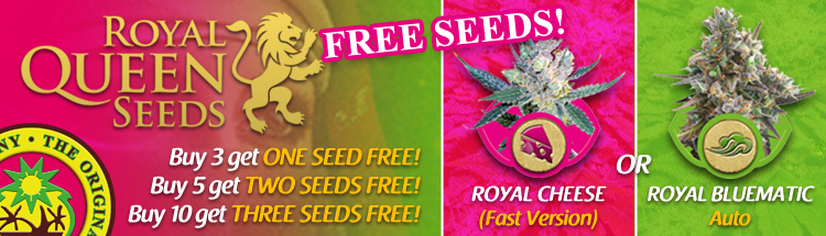 Free Cannabis Seeds From Royal Queen Seeds