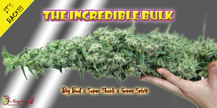 Best Cannabis Seeds 2014 - Dr Krippling -The Incredible Bulk Available In Packs 1, 5,10